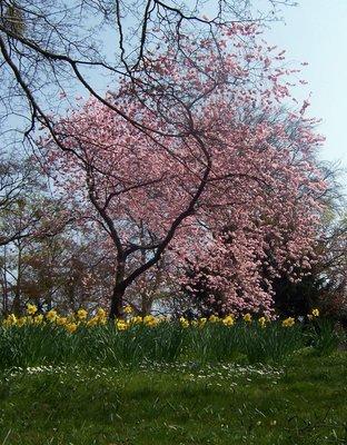 Kurhaus Park in spring