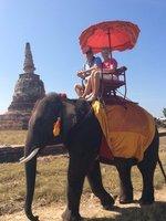 À dos d'éléphant tranquillement pas vite ...