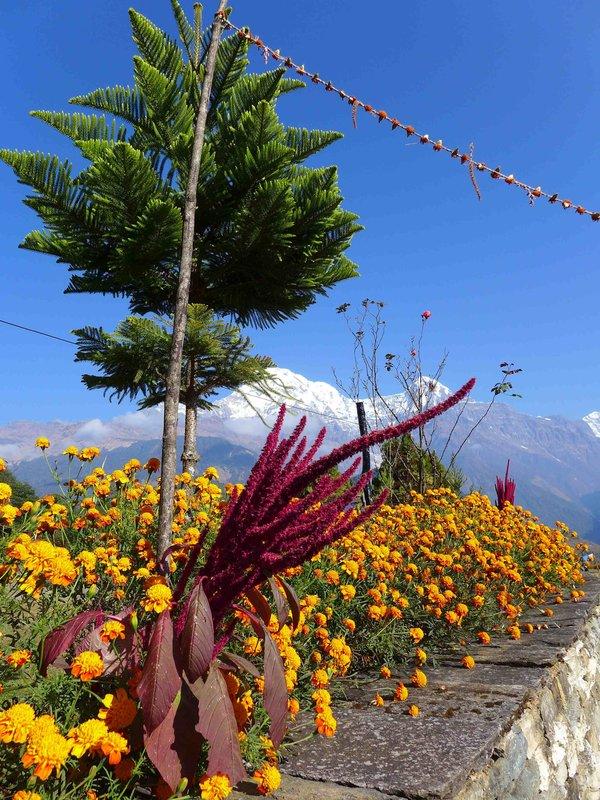 Végétation surprenante en Anapurna.