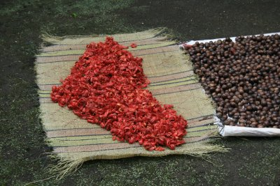 Mace and nutmeg drying