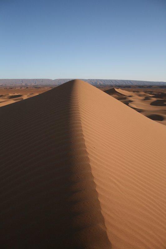 Backbone of the desert