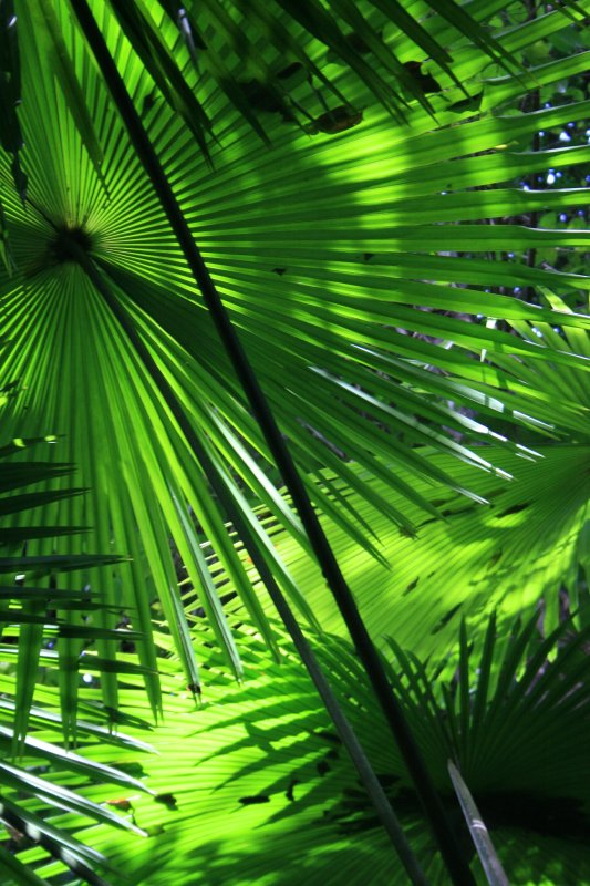 Rainforest foliage