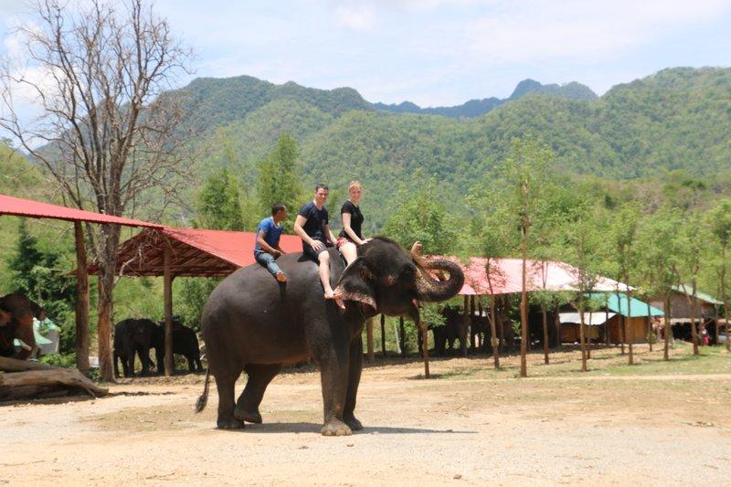 large_Day_2_Elephants_6.jpg