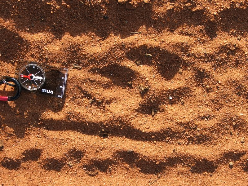 Cheetah spore