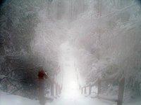 snow in Emei Mont.