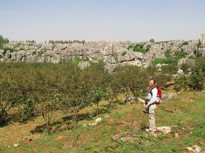 persimmon orchards at the stone forest