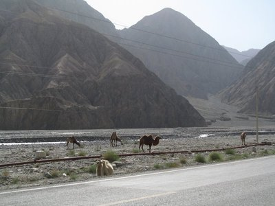 camels_in_riverbed_Karakoram