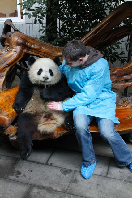 large_panda6.jpg