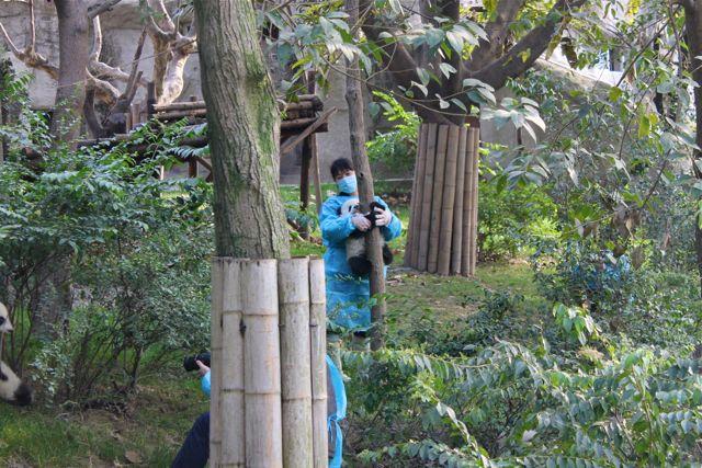 large_panda7.jpg