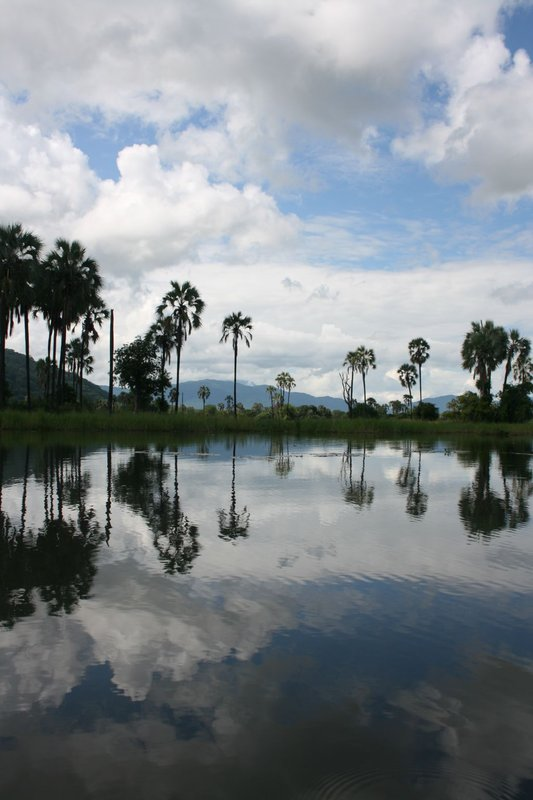 Mirror like lake in Liwonde NP 2