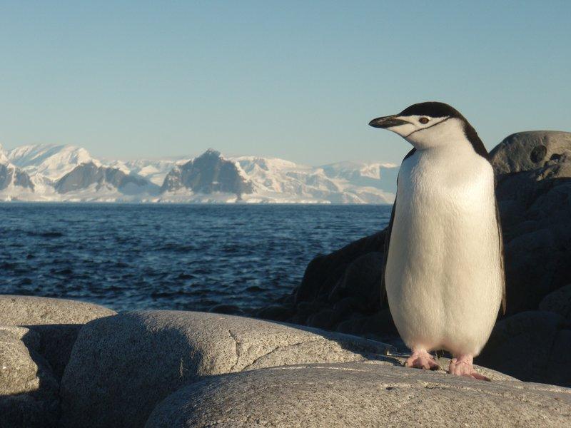my favourite penguin