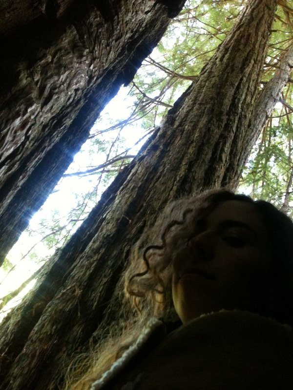 Redwood magic