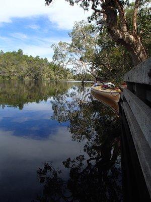 Noosa Everglades