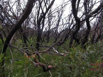 Aftermath of a bush fire from a couple years ago