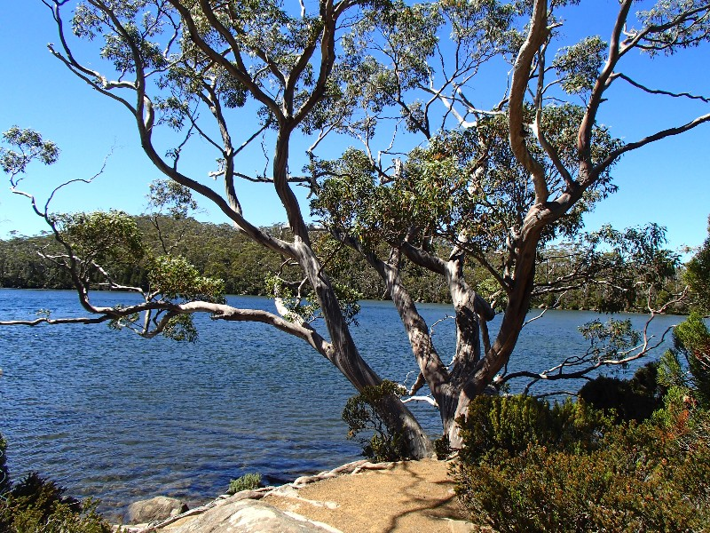 Mount Fields National Park
