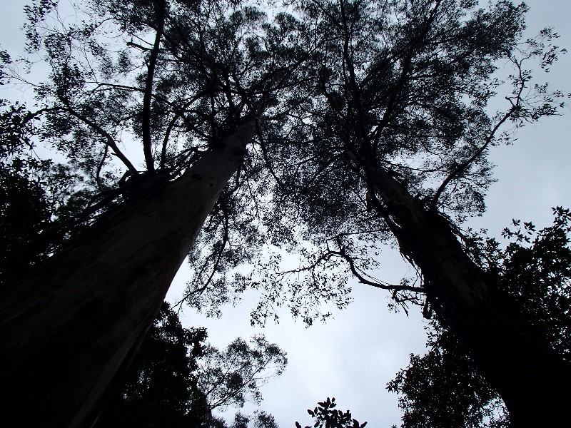 Great Otway National Park