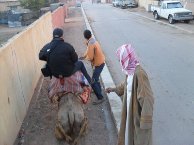 Getting on the camel is the worst