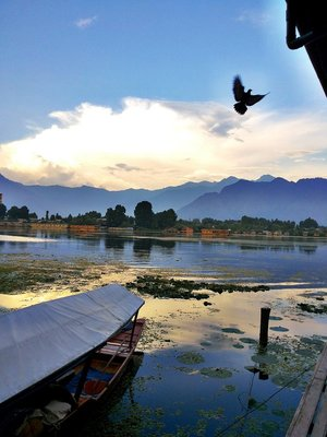 A Flight Through Paradise- Kashmir