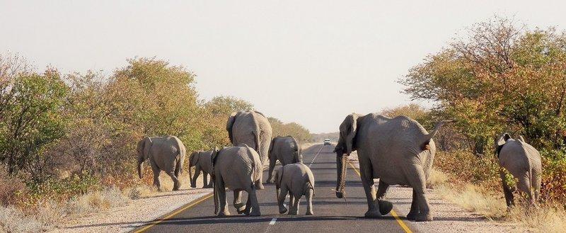 Etosha traffic