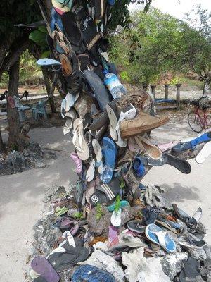Strange shoe-tree on Gili T