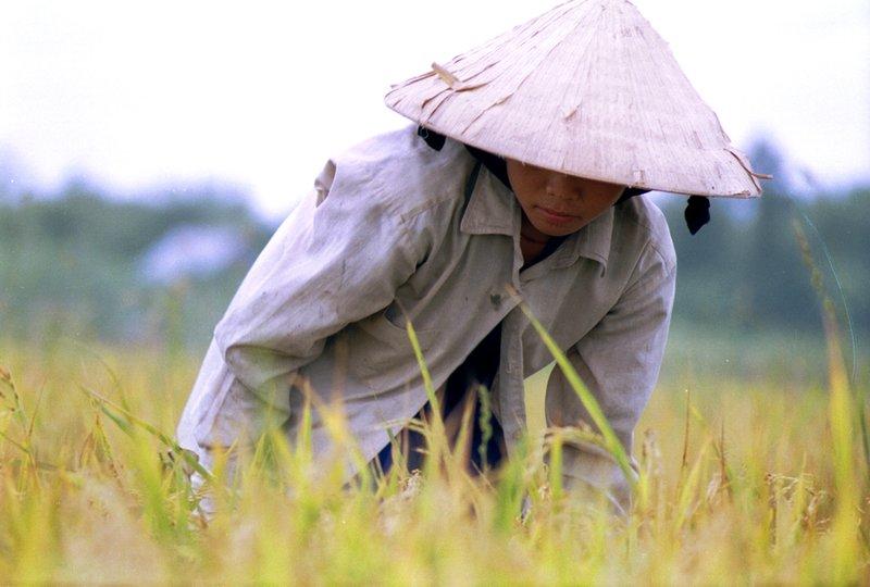 Farmer girl in mekong delta