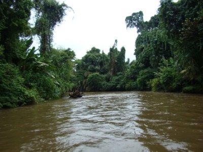 Canals of tortuguero