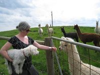 Em, Leroy, Alpacas!