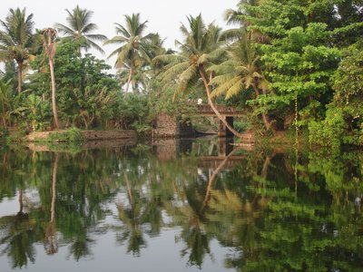 The Kerala Backwaters