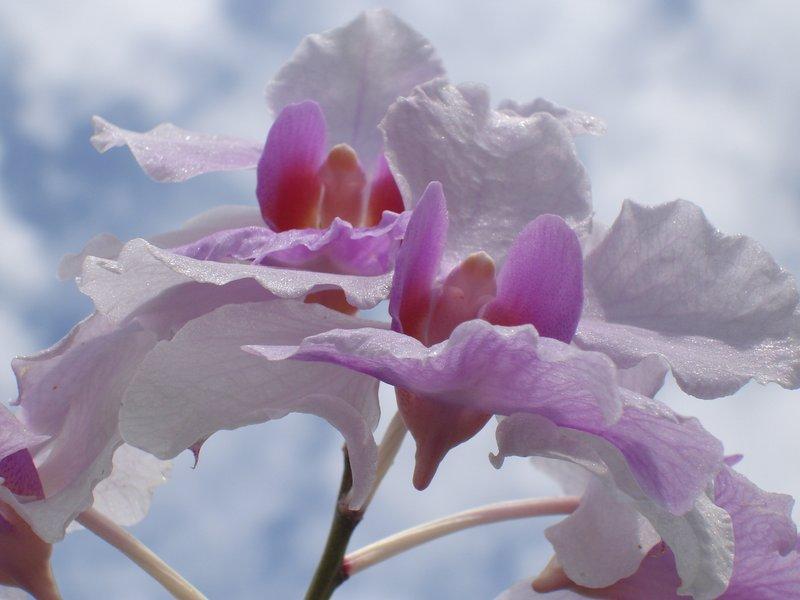 Orchid Garden, Kuala Lumpur