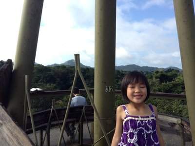 At the top of the bird observation tower