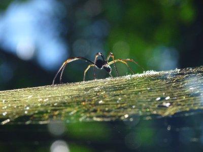Spinne im Busch bei Iguazu