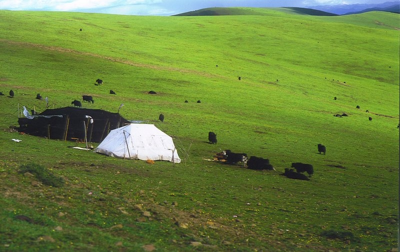 Nomad's tent on the Grasslands of Kham, Eastern Tibet