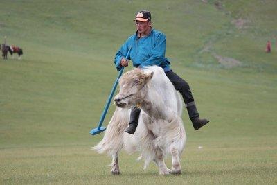 Yak Polo