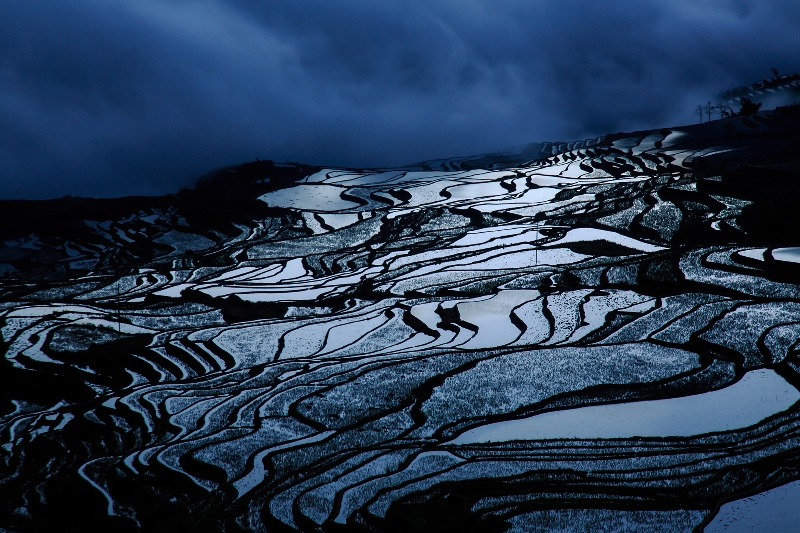 Rice Terrace Yunnan