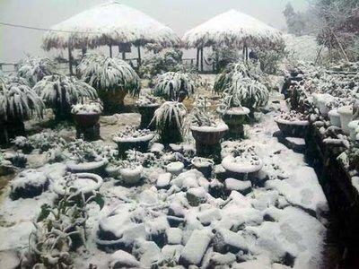 Sapa snow1
