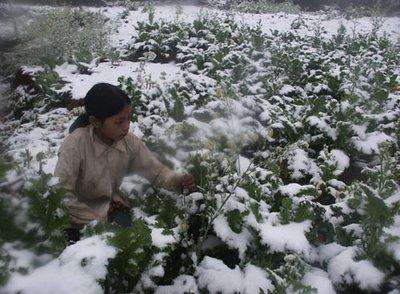 Sapa snow12