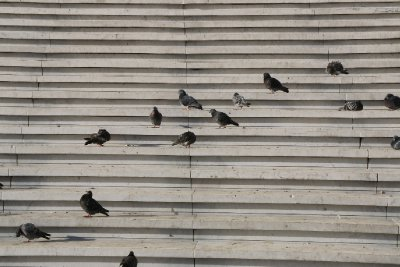Pigeons sun them selves on the steps