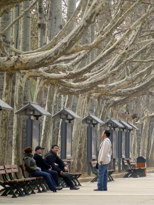 A STRANGE LOOKING AVENUE OF TREES - NEAR XIAN CHINA