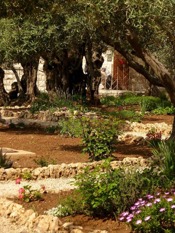 Garden of Gethsemanne Jerusalem