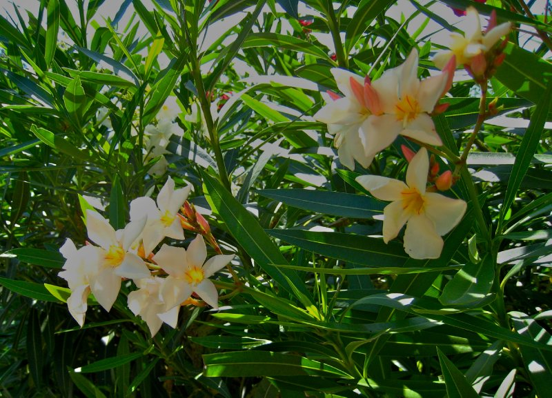 large_bermuda_087.jpg