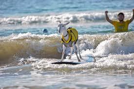 surfing_goat.jpeg