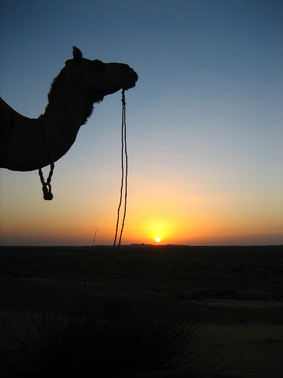 Jaisalmer - safari camel sunset vertical