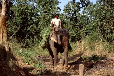 Départ en éléphant au Parc de Chitwan