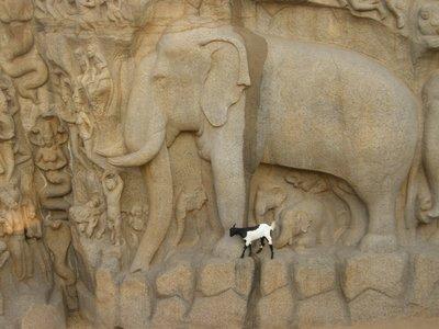 La chèvre et l'éléphant