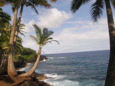 Palmiers sur le Pacifique