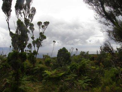 Randonnée sur Pico