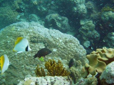 Poissons Grande Barrière de corail