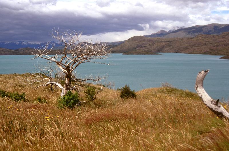 Dans le Parc Torres del Paine