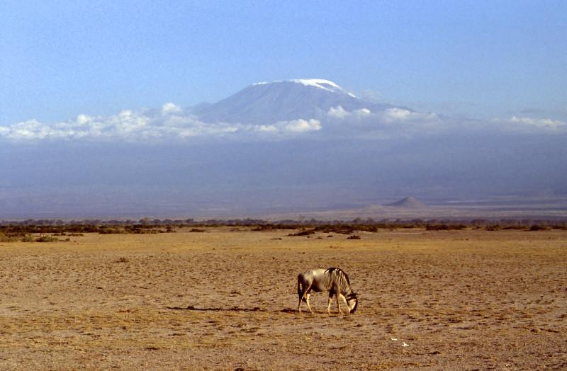 Le Kilimandjaro vu d'Amboseli
