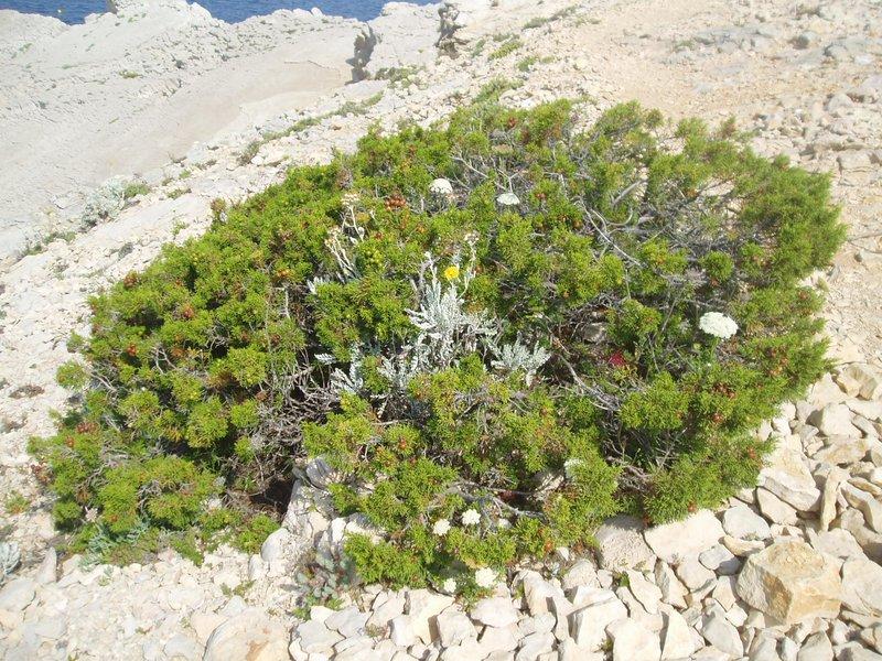 Plantes dans la rocaille